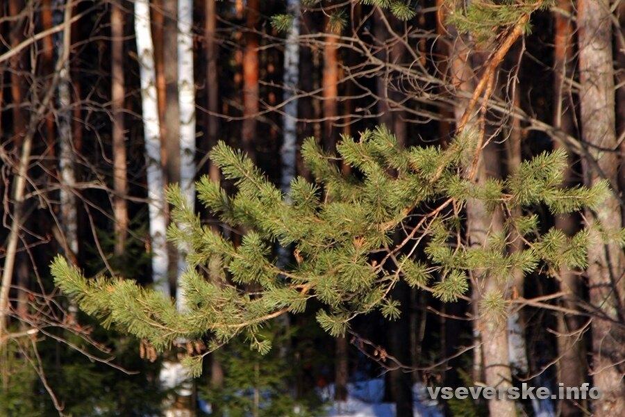 В России впервые леса станут частной собственностью