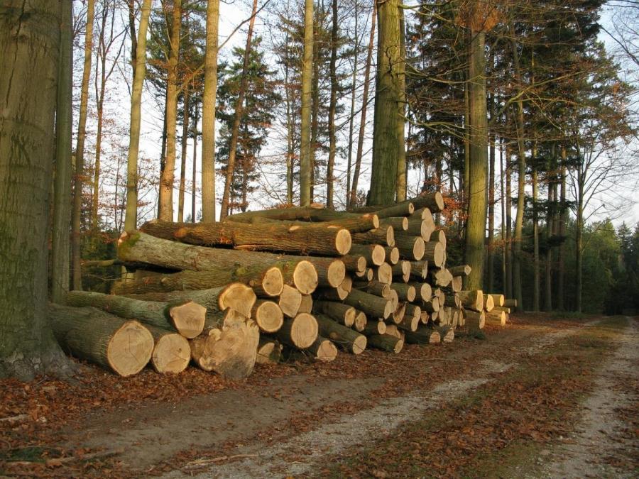 Владимир Путин поручил запретить экспорт необработанной древесины