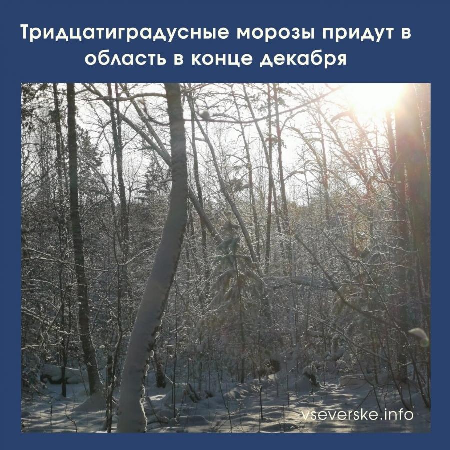 Тридцатиградусные морозы придут в область в конце декабря