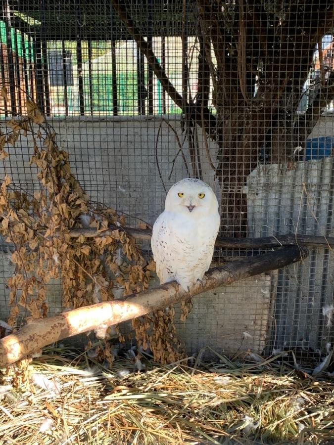 Кормление белой совы в Северском зоопарке