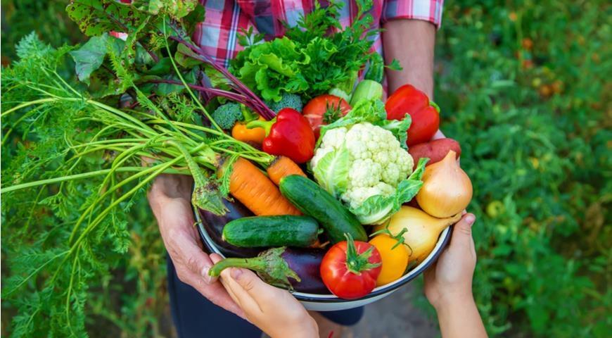 В Северске продолжается благотворительная акция «Овощной экспресс»