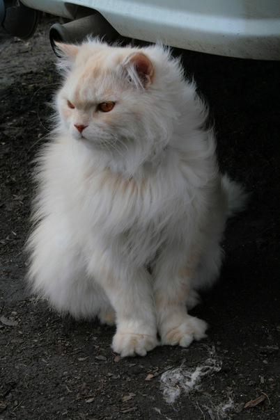 Северчане! Помогите найти Кота!