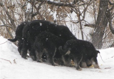В Северске на морозе гибнут щенки!